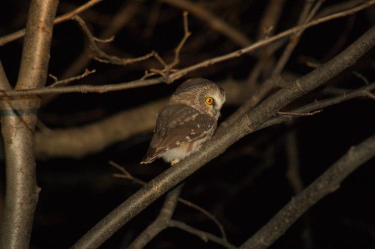 new owl9